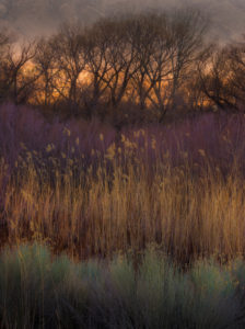 Pattern of grass and trees, Sunrise