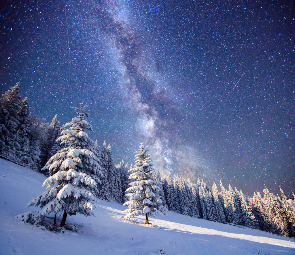 forest with milkyway