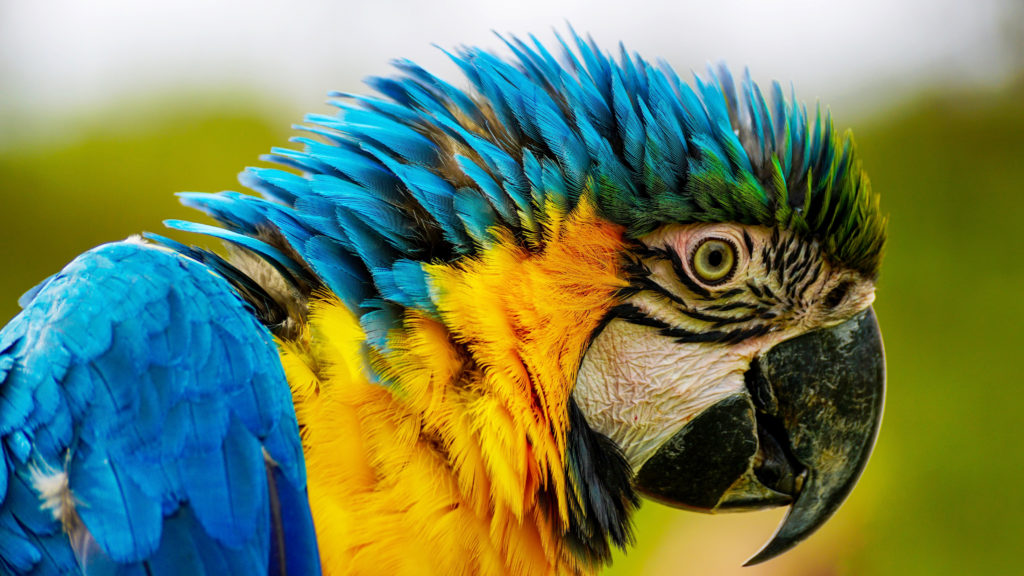 Close-up Photography Of Blue And Yellow Macaw